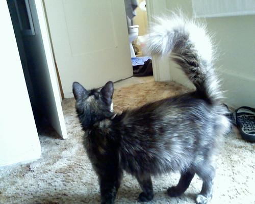 Pepper's fluffy tail