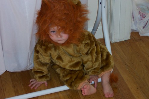 Scary Lion!