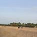 Nilaveli Beach image