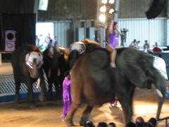 Circus at County Fair, Michigan (pingnews)