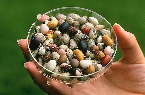 Nuña beans