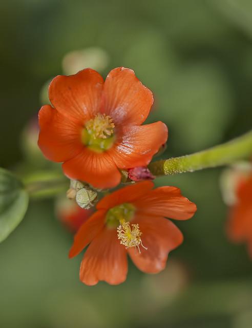 Wild flower 20d_2478