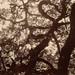 branches by lawatt