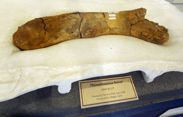 thescelosaurus-femur-bone