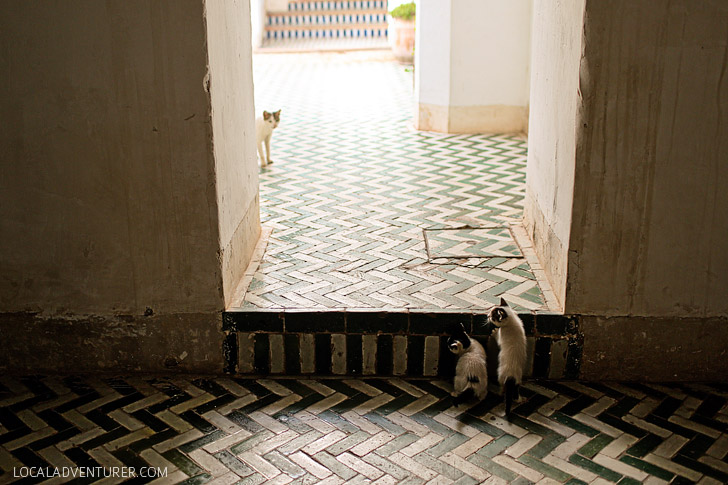 Kittens and Cats of Morocco at Palais de la Bahia.