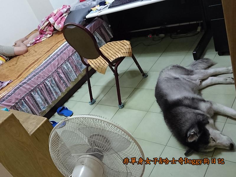 Doggy颱風01
