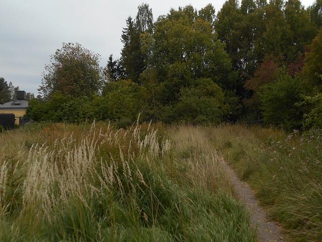 Niittynäkymiä syksyllä; heiniä polun varrella 15.9.2015 Espoo Leppäsilta