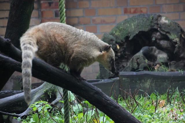 Besuch Zoo Rostock 17.10.2015121