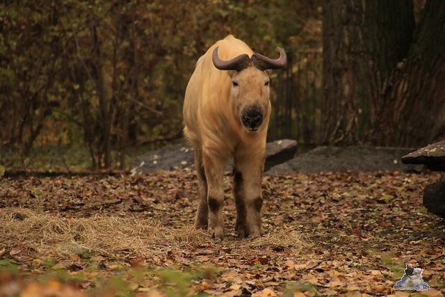 Tierpark Berlin 07.11.2015  0194