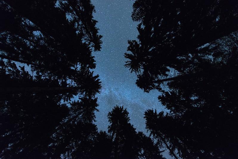 Stars in the forest - Chuderhüsi