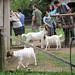 140915_visita_fazenda_viamao-09