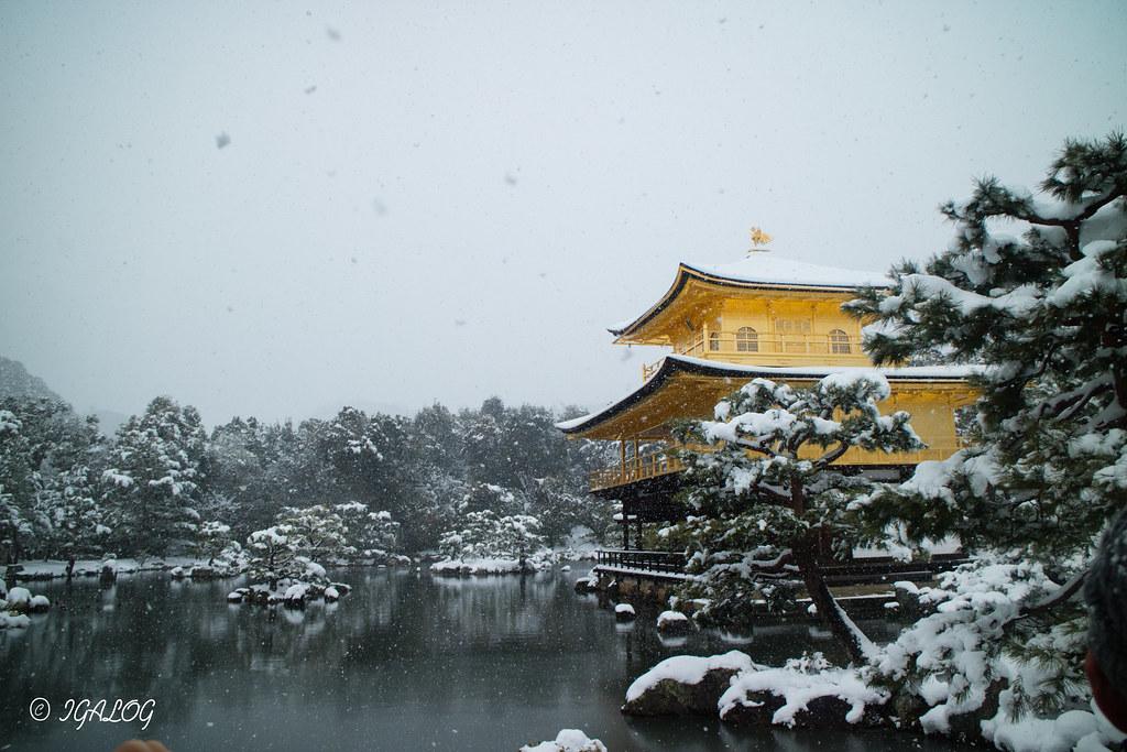 雪の金閣寺を側面より