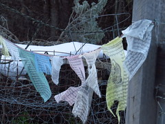 Winter garden, Tibetan prayer flags