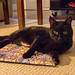 Kerwyn and the Christmas mat 120/365 by mjlmadison