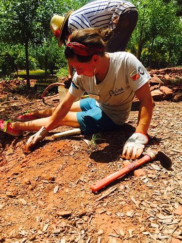 Max Tapia_Dalton Zanetti planting native grass-7