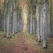 Beech cathedral - Cansiglio forest (Belluno) by Beffy the Witch