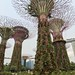 Power trees @ Garden by the Bay by inmacus