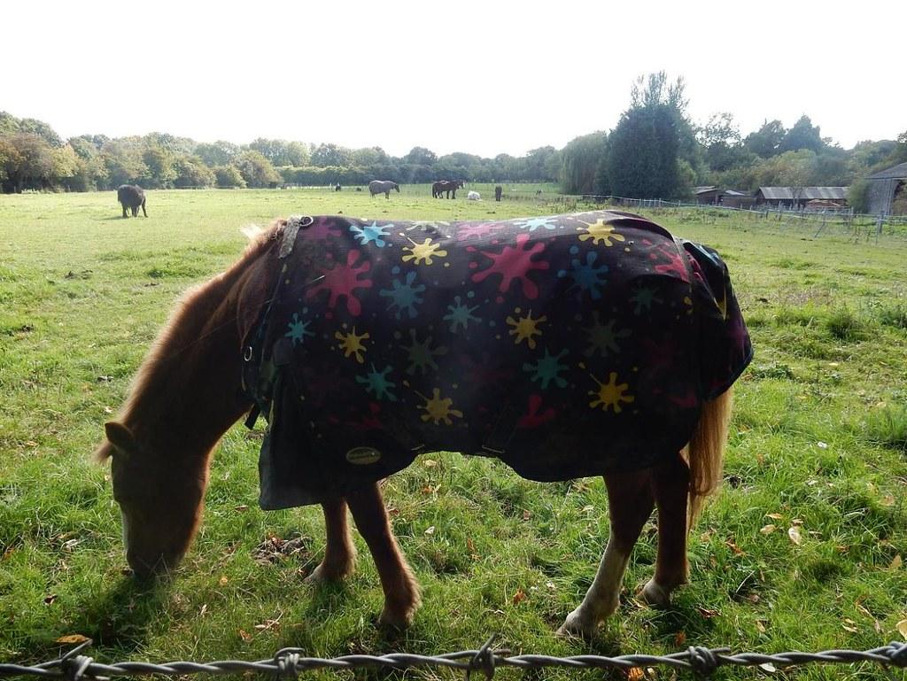 Starry Horse Borough Green to Sevenoaks