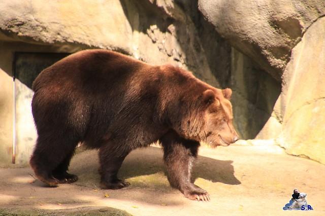 Tierpark Hagenbeck 27.09.2015 03