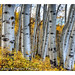 the eyes of the aspens by Merilee Phillips