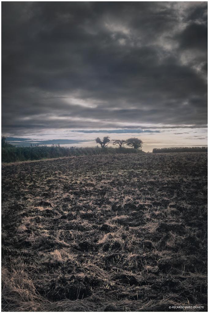 Kieffer's view. Lidcutt Farm, Bodmin