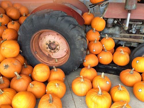 Tractor & Pumpkins