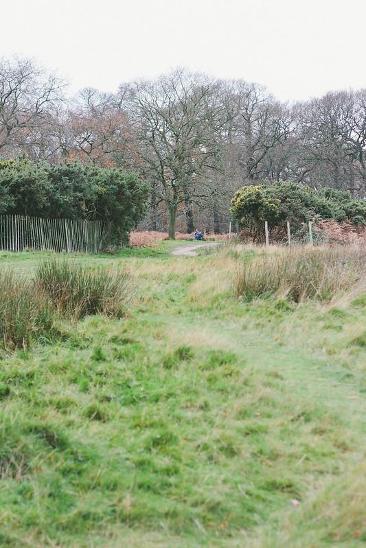 {winter walk through richmond park} via chevrons & éclairs
