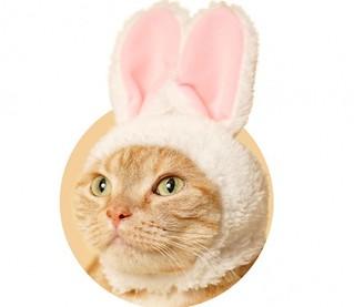 【官圖公開!】奇譚俱樂部【可愛貓咪頭套】專屬貓星人轉蛋之作 第五彈「萌兔貓」!