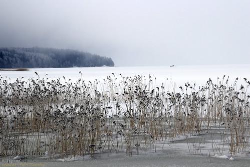 teijonationalpark teijonkansallispuisto talvi winter