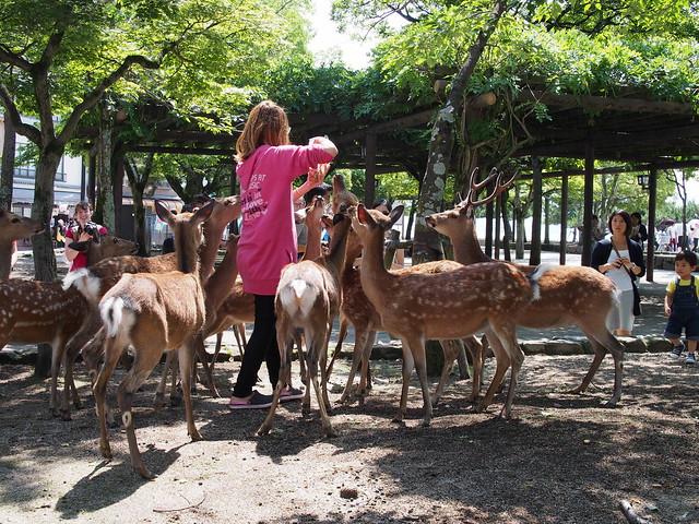 Deer food