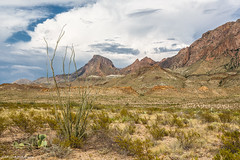 Desert Green - Big Bend National Park, Texas
