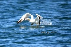 Dolphin Survey 27th September 2015