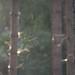 Snetterton thetford forest deer