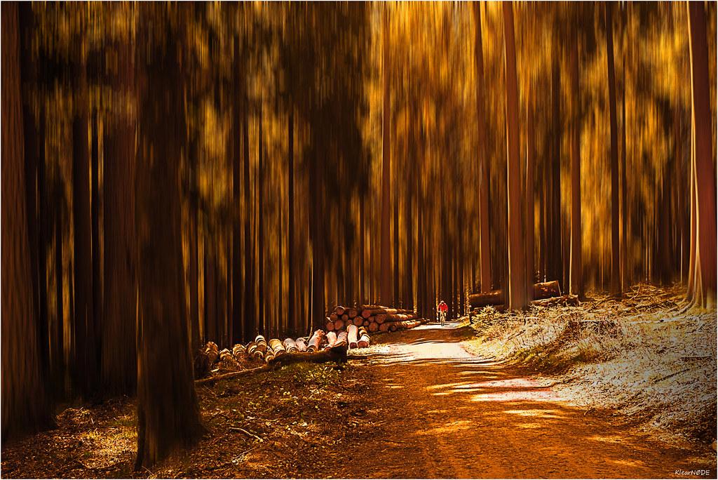 Balade en forêt 21989468666_ac2ffb3fc7_b