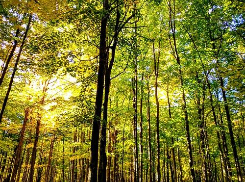 trees fallbeauty
