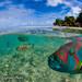 Tikehau-lagon-1-Frederique-legrand by NOSYTOUR - Diving Tour Operator