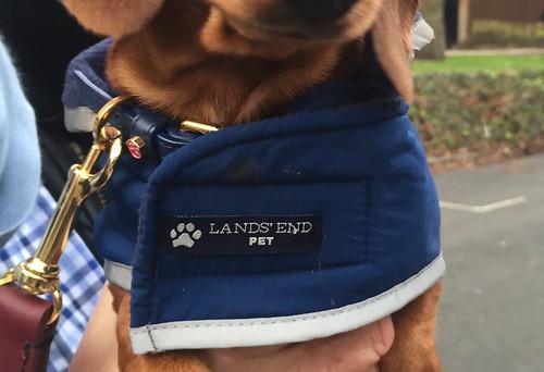 Lands End pets