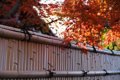 kyoto passing Autumn