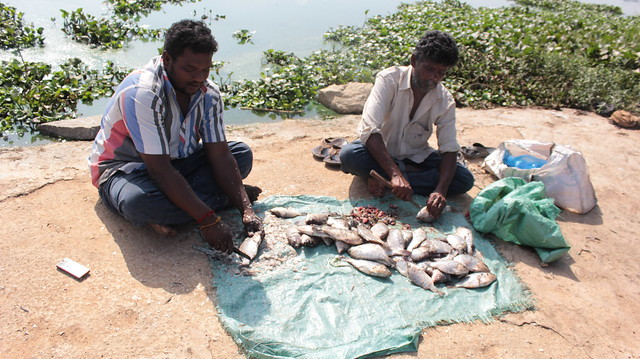 Two fishermen prepare their catch for sale at local eateries. They throw the innards of the fish back into the lake, as food for other organisms.