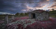 Liquen rojo en viejo refujio de pastoreo, sur de Salamanca