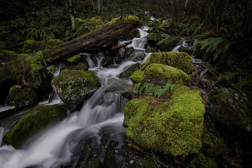 canon5dmarkii canoneos5dmarkii canonef1635mmf28liiusm ariel washington wa usa marblecreek marble creek stream waterfall green moss lush ferns log longexposure exposureblending nature landscape