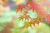 Autumn Colours by Jacky Parker Floral Art