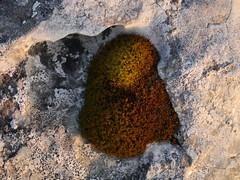 Moss on Limestone