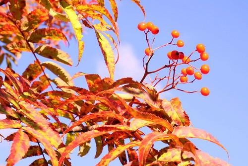 ★秋の深まり★乗鞍から・・・