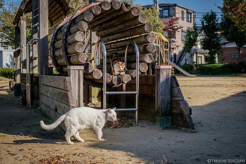 Tokushima Cat Color #239