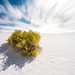 White Sands, New Mexico by Markus Ortner