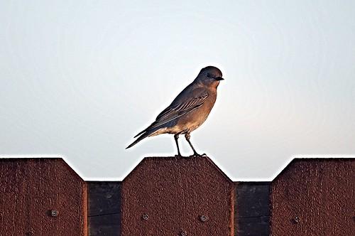 mountain bird florida watching birding bluebird birdwatching