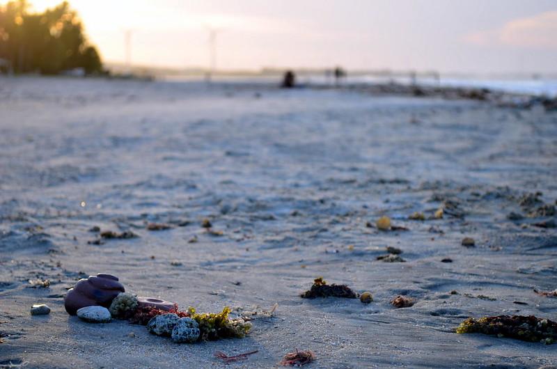 todo mundo já catou concha na praia, Flecheiras, 2017