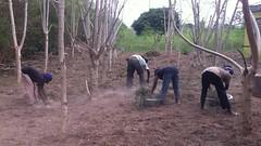 Women preparing ground for new planting 8