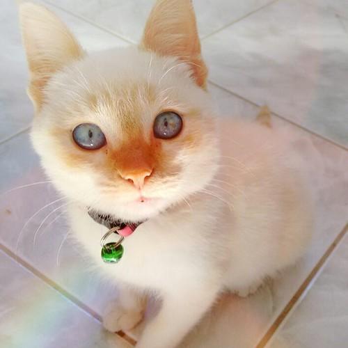 Oi para vocês que não tem olhinhos tão lindos como os meus! 🐈🐱